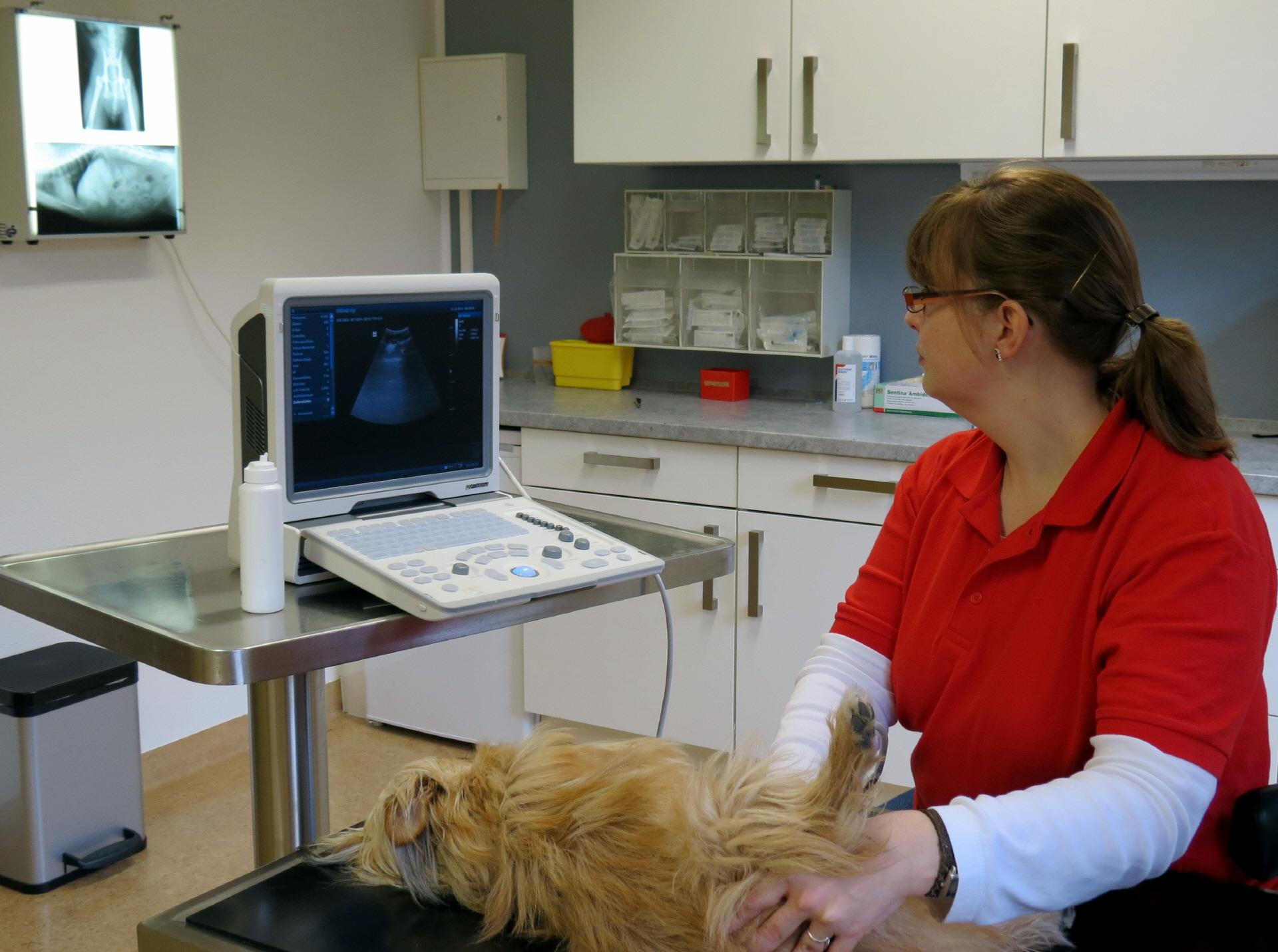 Tierarzt Anke Sühwold aus Aurich Ostfriesland Leistungen, Ultraschall